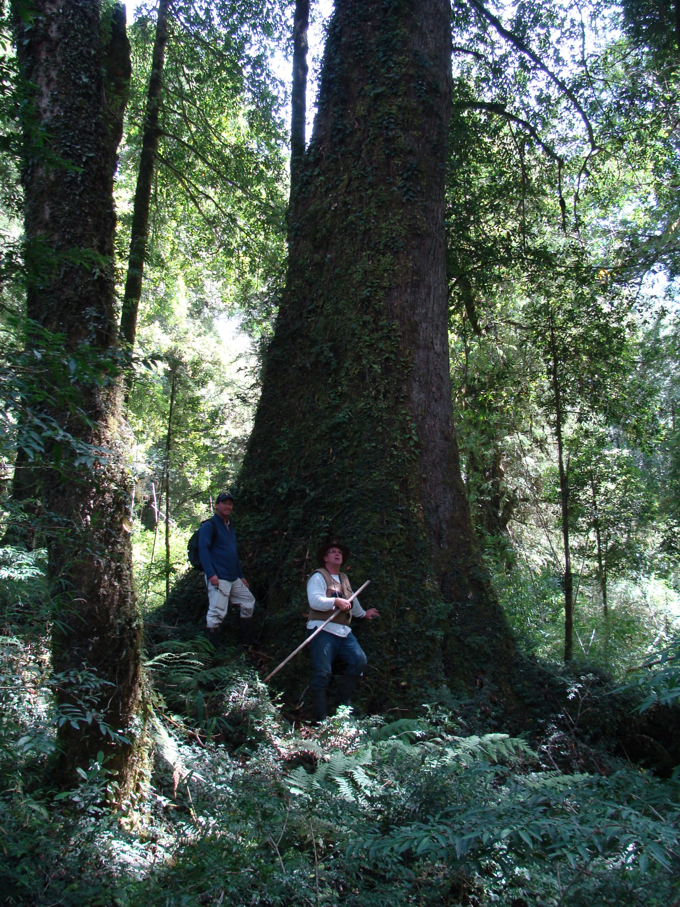 Chile Forest Fund - Sustainable forest development